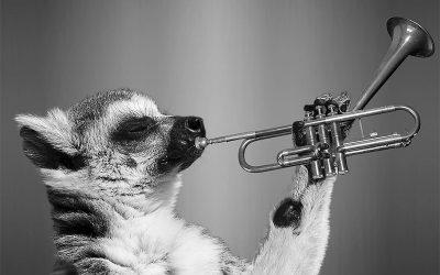Quina trompeta compro?